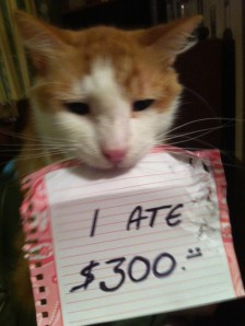 cat-shaming-money